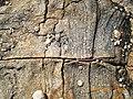 Monte Matambo em Tete - panoramio - Nelson Deolinda Amin… (14).jpg