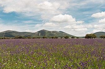 Montes de Toledo - Retuerta del Bullaque.jpg