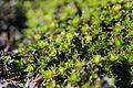 Moss (15634998169).jpg