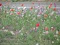 Moulsecoomb Flowers (4706072766).jpg