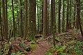 Mount Seymour Provincial Park, BC (DSCF9036).jpg