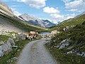 Mucche sul sentiero per le sorgenti dell'Adda - panoramio.jpg