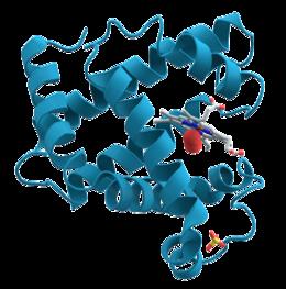 protéine musculaire