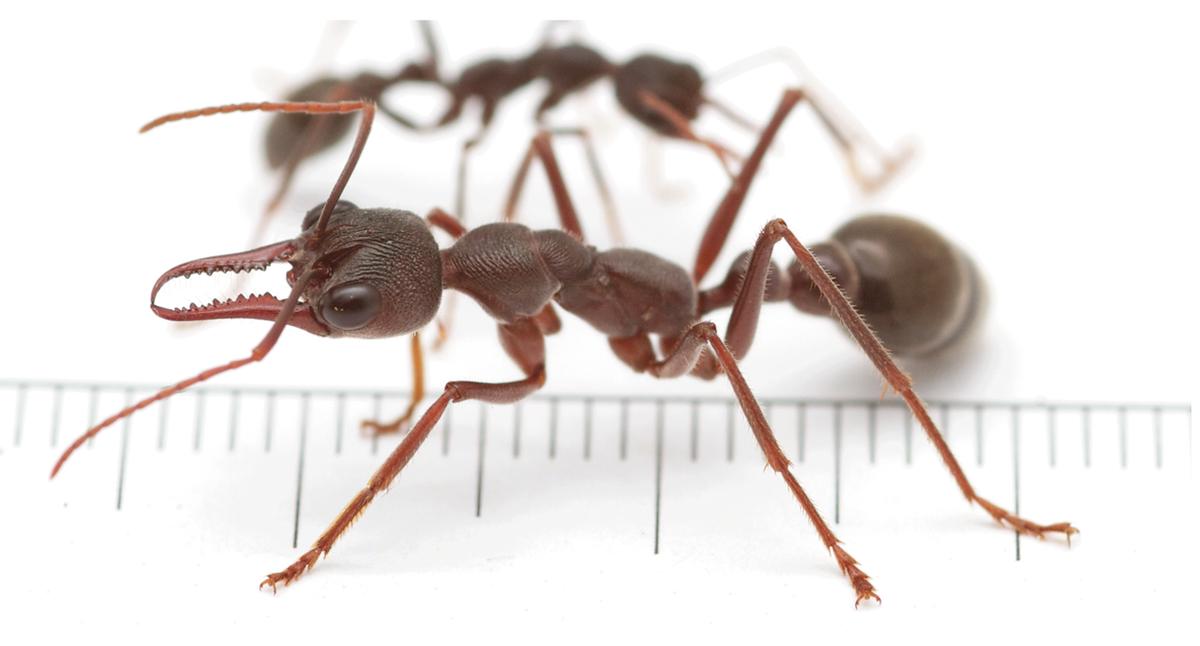 Ant Free Dog Food Storage