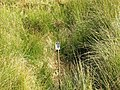 Mystery object - geograph.org.uk - 237380.jpg