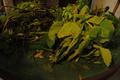 Não falta Erva - EncontrADA 2016 - Oficina Conexão com as Plantas.png
