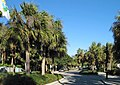 Naples Florida Street R01.jpg