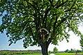 Naturdenkmal Wendlingen-Kastanienbaum mit Wegkreuz-81160714205.jpg