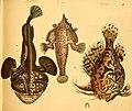 Naturgeschichte in Bildern mit erläuterndem Text (Taf. X) (6058656305).jpg