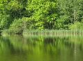 Naturpark Aukrug Schleswig-Holstein Germany Spiegelung im See.jpg