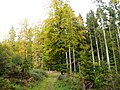 Naturpark Schönbuch - panoramio (6).jpg