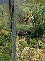 Natuurpark Lelystad - Otter (Lutrinae) v3.jpg