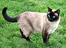Neighbours Siamese.jpg