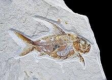 Datazione fossile