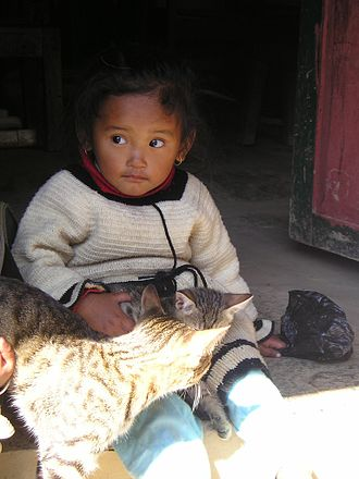 Human bonding - A child bonding with a cat. Human to animal contact is known to reduce the physiological characteristics of stress.