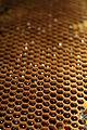 Newlands bees 018.JPG