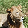 Ngorongoro 2012 05 30 2571 (7500986204).jpg