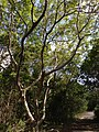 Nice Tree - panoramio.jpg