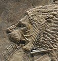 Nineveh lion 645 BCE.jpg