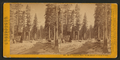North American Hotel; on the summit of Sierra Nevada. (no. 636), from Robert N. Dennis collection of stereoscopic views.png