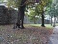 Ogrodzenie Parku Miejskiego w Kielcach (10) (jw14).JPG