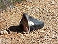 Oiseau (2363292869).jpg