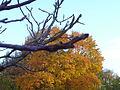 Oktober 2013 Finsterwalde (Alter Fritz) 07.JPG