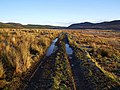 On the Track to Badbog - geograph.org.uk - 96113.jpg