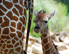 Birmingham Zoo - Wikipedia, the free encyclopedia