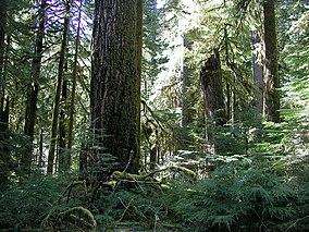 Opal Creek Wilderness Wikipedia