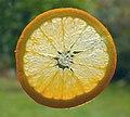 Orange slice.jpg