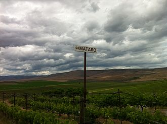 Mourvèdre - Mourvèdre/Mataro was first planted in Washington State at Red Willow Vineyard in the Yakima Valley.