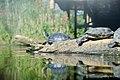 Ouwehands Dierenpark (15062096355).jpg