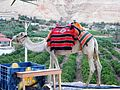 Palestine, Carantania, Temptation Mount (Jack camel) (4).jpg