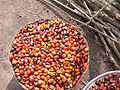 Palm oil production in Jukwa Village, Ghana-09.jpg