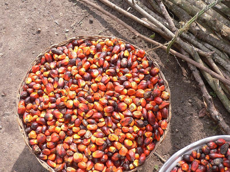 File:Palm oil production in Jukwa Village, Ghana-09.jpg