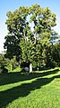 Parc Dendrologic - Arcalia (1424104555).jpg
