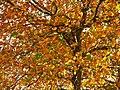 Park views in autumn (Netherlands 2011) (6311404107).jpg