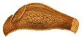 Parmacellilla filipowitschi.png