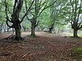Parque del Gorbea (17).jpg