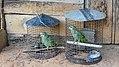 Parrots in Gunsi (33400957952).jpg