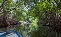 Paseo por la Laguna de La Restinga en la Isla de Margarita.jpg