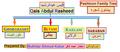 Pashtoon family tree پښتون شجره.png