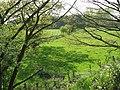 Pasture beside the railway line - geograph.org.uk - 1278078.jpg