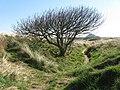 Path along the dunes - geograph.org.uk - 1247816.jpg