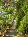 Path through pines.jpg