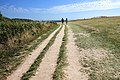 Path to Old Harry Rocks.jpg