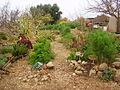 PikiWiki Israel 18709 Herbs garden in Kibbutz Lotan.JPG