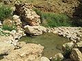 PikiWiki Israel 31566 Pezael springs in Jordan Valley.JPG