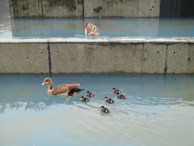 משפחת יאורית מצרית בפארק מרום נווה